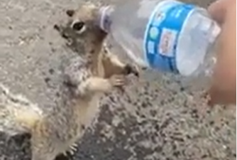 Thirsty Squirrel Asks Tourist For Water