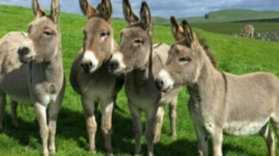 COVID19: Consume Donkey Milk to boost immunity