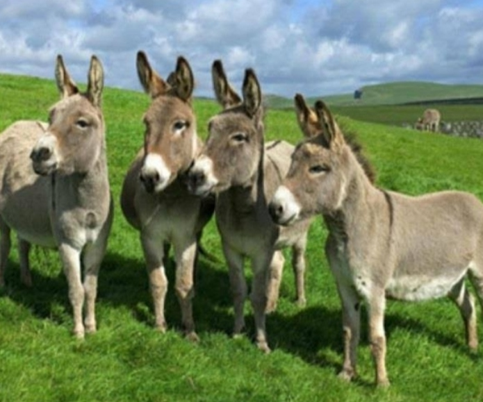 COVID19: Consume Donkey Milk to boost immunity