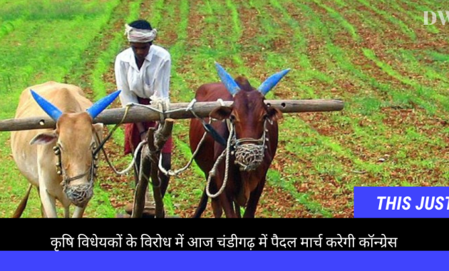 To oppose the three farm Bills, the Congressmen will stage a march from Haryana Congress office in Sector 9, Chandigarh,