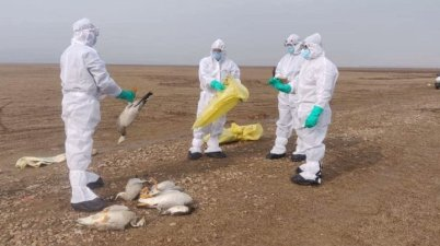 Bird Flu Outbreak in India 2021