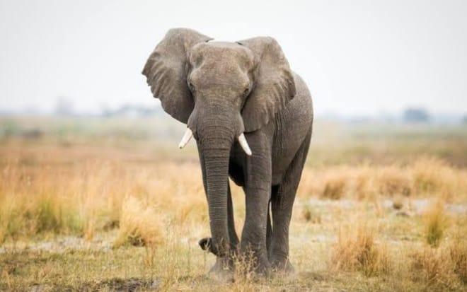 Uttarakhand: Elephant killed two including woman in Lansdowne